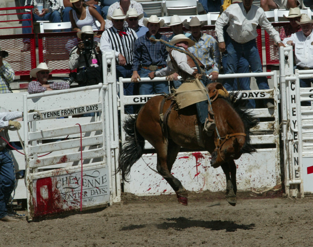head injuries in rodeo essay