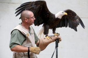 Eagle Day @ Hawk Mountain Sanctuary Association   Kempton   Pennsylvania   United States