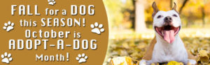 October is National Adopt a Dog Month!