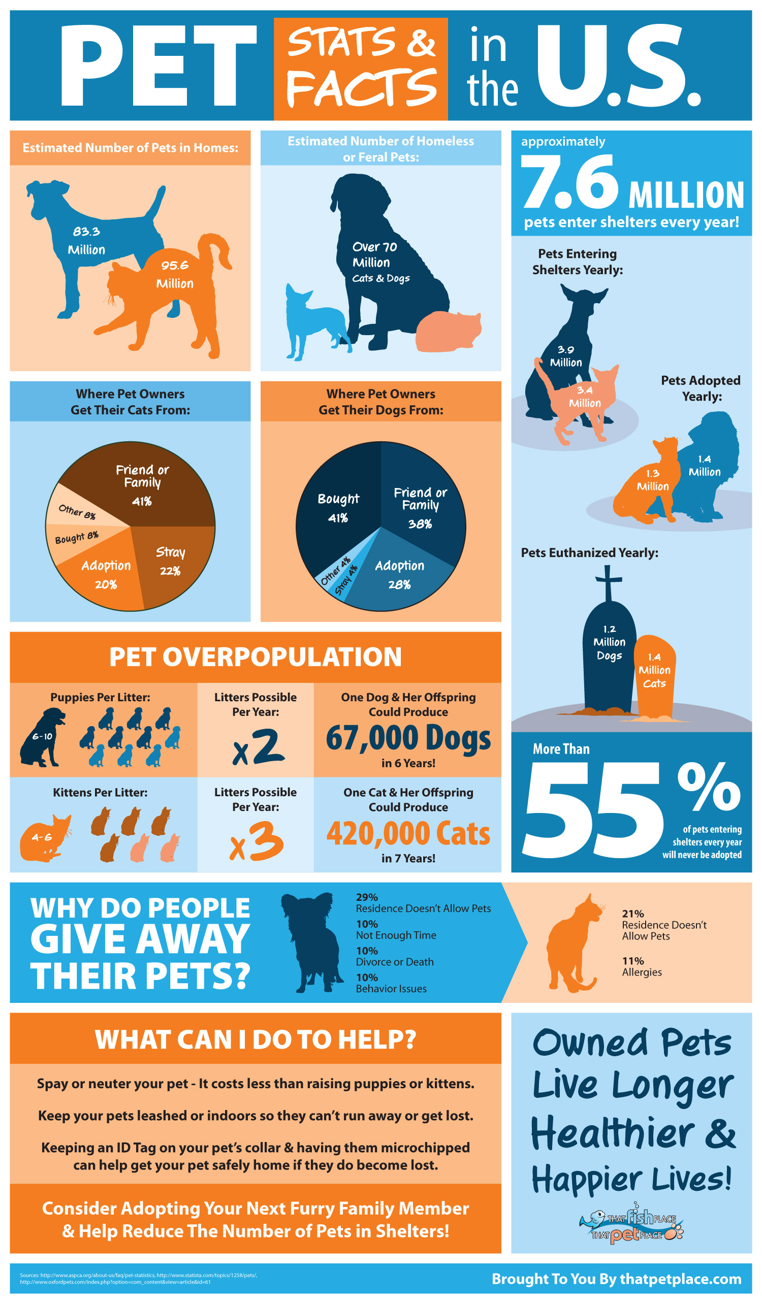 Why You Should Adopt A Pet From A Dog