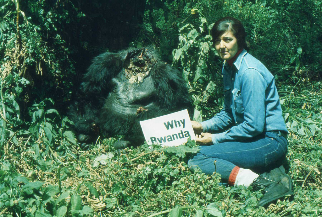 dian fossey devoted thirteen years in the study of gorillas