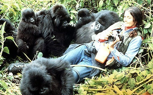 Dian Fossey – The Complexity of a Misanthropic Woman Who Saved Mountain Gorillas