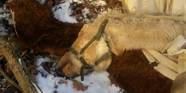 $1,000 Reward Offered by Hillside SPCA for Information Leading to Arrest for the Deaths of Frozen Horses Dumped on Rural Road in Schuylkill County, PA