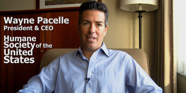 Wayne Pacelle, HSUS CEO,  Accused of Sexual Misconduct