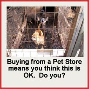 Actions can stop puppy mills from reproducing — Animal Welfare Issues