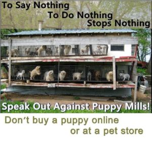 Amish Man Looking to Build Puppy Mill in Berks County, PA – Zoning