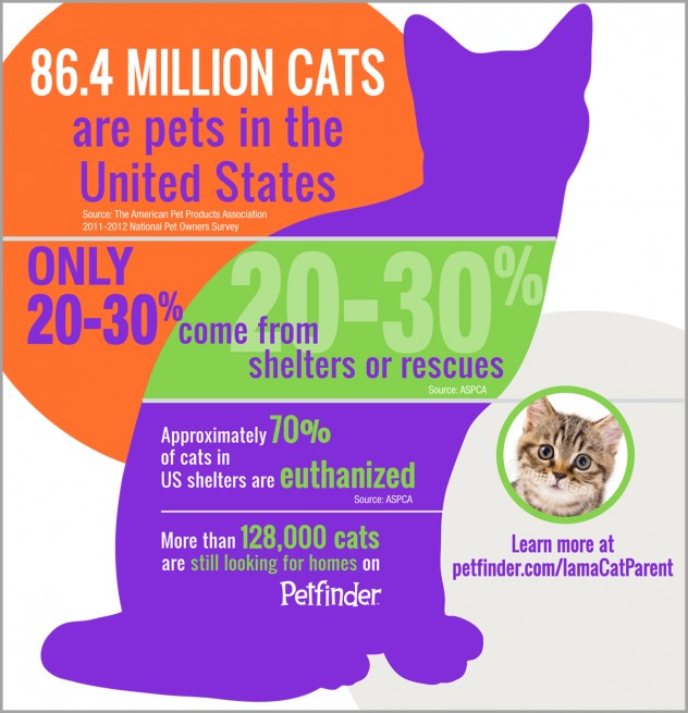 7 Things You Need To Know About Cats During Adopt A