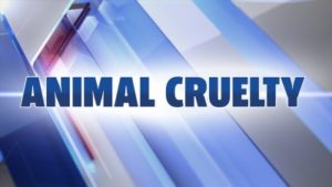 Notorious Pennsylvania Puppy Mill Owners Charged with Animal
